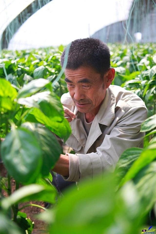 济南槐荫,自驾农园摘蔬菜